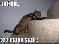 funny-pictures-cat-wants-fewer-stairs